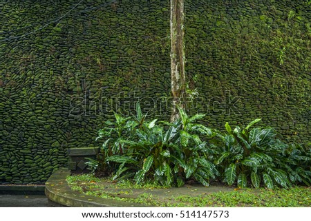 Mossy Environment in Pura Tirta Temple, Bali, Indonesia
