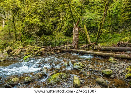 Mossy Oregon Creek. Columbia River Gorge Mossy Scenic Landscape