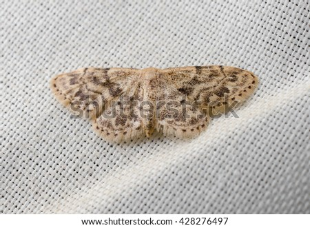 moth indoors (curtain)