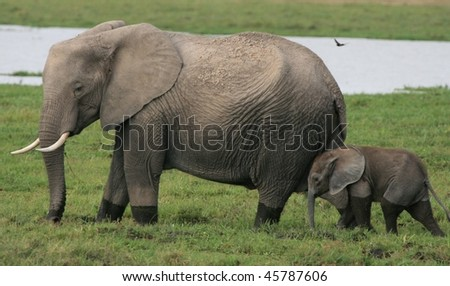 Mother elephant with baby in the African wild