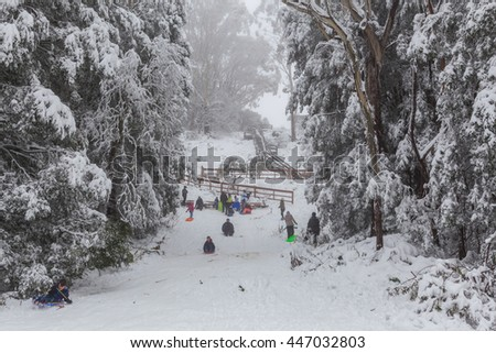 Mount Donna Buang, Victoria, Australia - Jun 25 2016:  People walking and tobogganing up the snow covered road on Mount Donna Buang