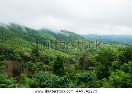 mountain cloud forest