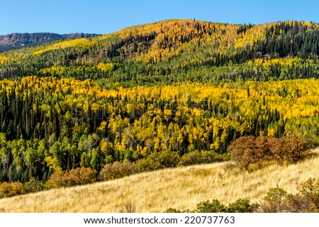 Mountain slopes filled with changing yellow, orange and green Aspen trees on sunny fall morning