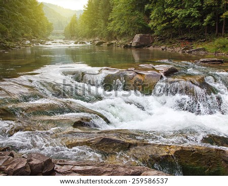Mountain stream in a  forest.