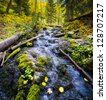 Mountain stream in the autumn aspen forest - stock photo