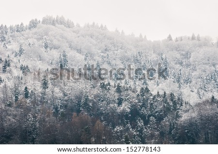 Mountain woods under the snow