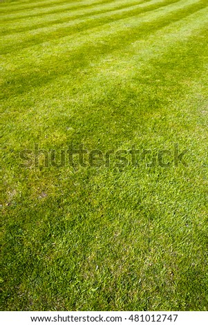 Mower stripes in a grass lawn. Full frame background texture.