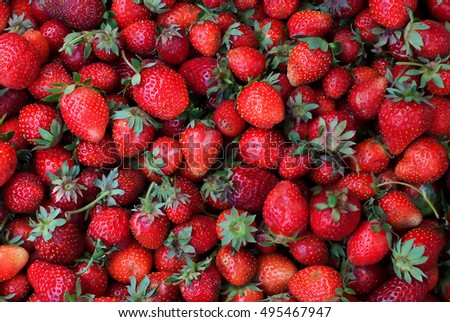 Much fresh organic made strawberries