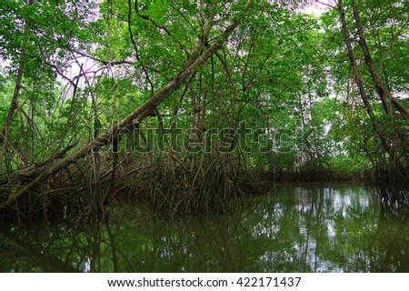 Muisne, Ecuador - March 16, 2016: Small river opening to pacific ocean, heavy tropical green vegetation and water