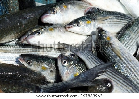 Pattern texture raw fish background concept stock photo for Eating mullet fish