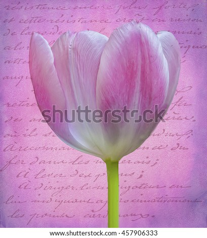 Multicolor tulip against textured background,photo art