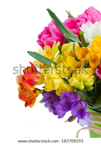 multicolored  freesia and daffodil  flowers   isolated on white background