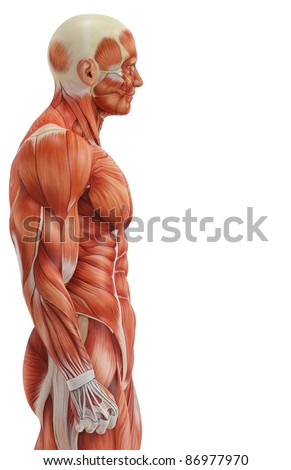 muscle man side view