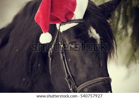 Muzzle of a black horse in a a red Santa Claus hat