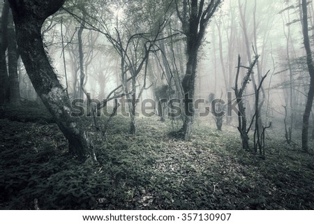 Mysterious dark old forest in fog. Spring morning in Crimea. Magical atmosphere. Beautiful natural landscape. Vintage style