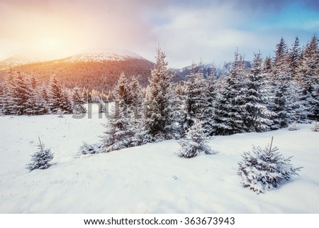 Mysterious Winter landscape with fog, majestic mountains in the winter. Sunset. Magic winter snow covered tree. Dramatic scene. Carpathian, Ukraine. Happy New Year! In anticipation of the holidays!
