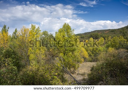 Narrow-leafed Ash, Fraxinus angustifolia, and Poplar groves next to de River Jarama, in Tamajon Mountains, Guadalajara Province, Spain.