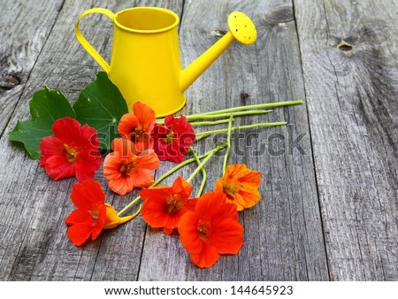 Egg M Nchen nasturtium kapuzinerkresse tropaeolum majus flowers on a wooden table on a background of
