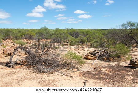 Native flora in the sandy bushland in Kalbarri National Park under a blue sky with clouds in Western Australia/Sandy Bushland/Kalbarri National Park, Western Australia