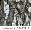 Natural background: a birch bark - stock photo