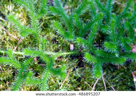 Natural background of green moss in the forest