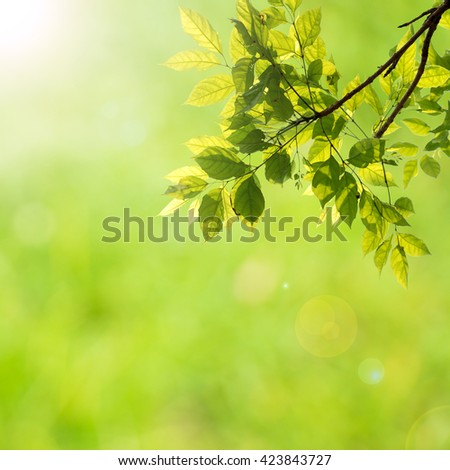 Natural green background. Leaf against bokeh background with len flare.