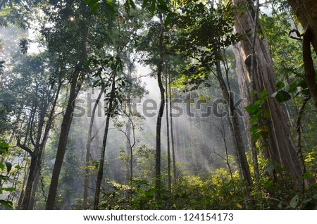natural resource in tropical rain forest, Khao Yai National Park, Thailand