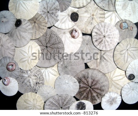 Natural sand dollars (unbleached). Great for a background.
