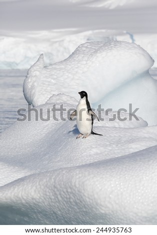 Nature and landscapes of Antarctic.Climatic and atmospheric changes. A penguin on an ice floe.