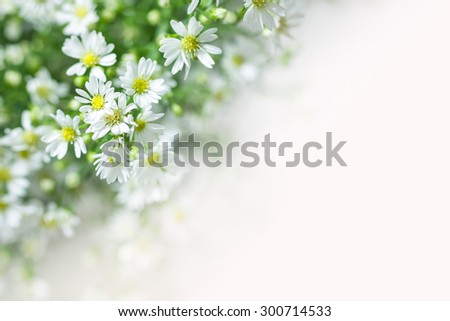 nature background of cutter flower