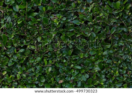 Nature background, Trees wall in the garden