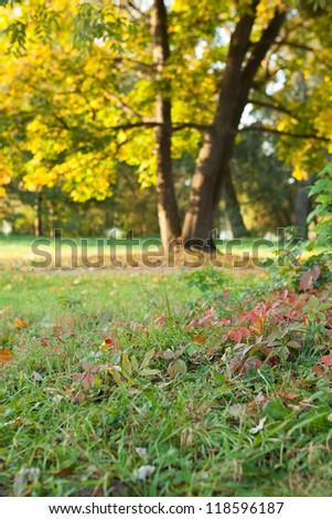 Nature in the early fall - the first steps of autumn, landscape