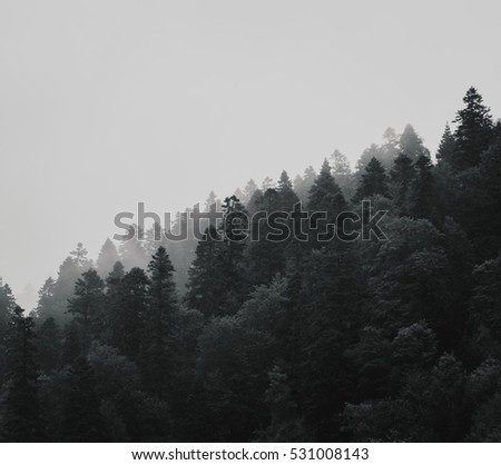 Nature landscape. Pine tree forest