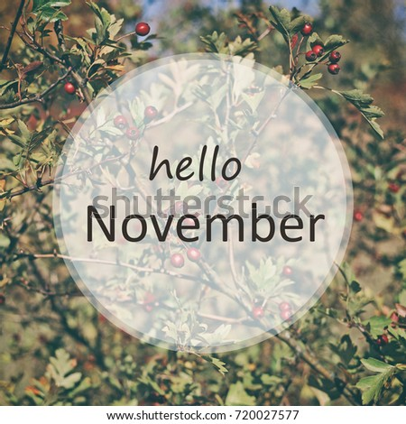 Nature On The Background And Text Hello November