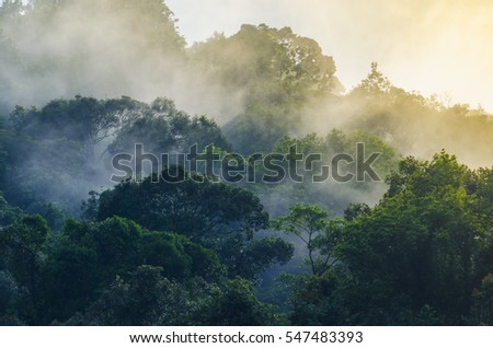 Nature view of Khao Yai National Park, Thailand
