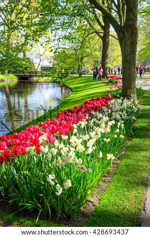 NETHERLANDS - MAY 6, 2016:  Blooming flowers in Keukenhof park in Netherlands, Europe.