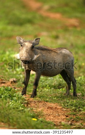 A corpulent pig with nice big breast a nice small female cat and very mischievous 5