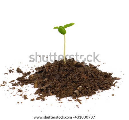 New life, a young plant seedling growing in a mound of earth on white background