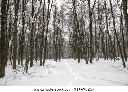 mysterious forest in winter - photo #27