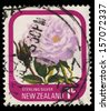 NEW ZEALAND - CIRCA 1975: A stamp printed in New Zealand shows Sterling Silver, series devoted to roses, circa 1975 - stock photo