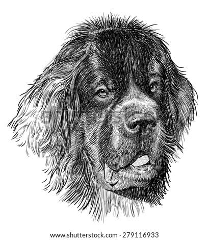 gorilla head illustration pencil sketch big stock illustration 319489553 shutterstock. Black Bedroom Furniture Sets. Home Design Ideas