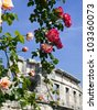 nice roses and old amphitheater on sunny day - stock photo