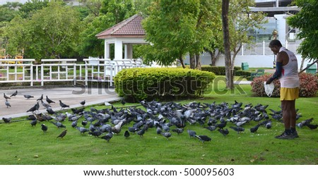 Nonthaburi, Thailand - OCTOBER 14, 2016: Old man feed birds in the park. Charity is a basic trait of people in Thailand
