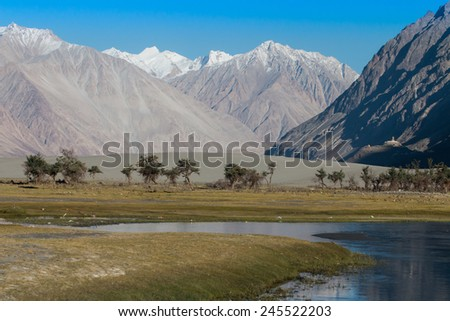 Nubra valley in Himalayas, Hunder, Ladakh, India