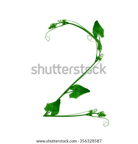 number from Fresh green leafs of young plant on white background