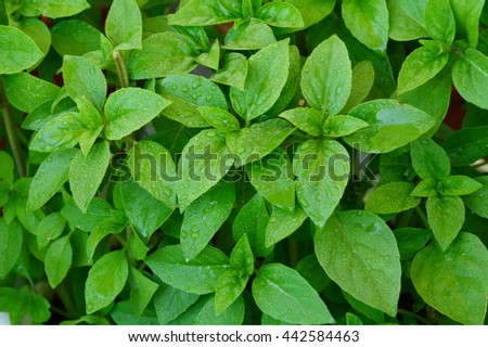 Nutritional Profile of Basil.
