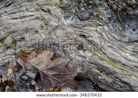 oak leaves and root