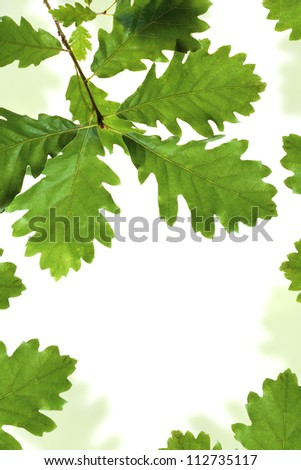 Oak leaves frame isolated on white with space for text