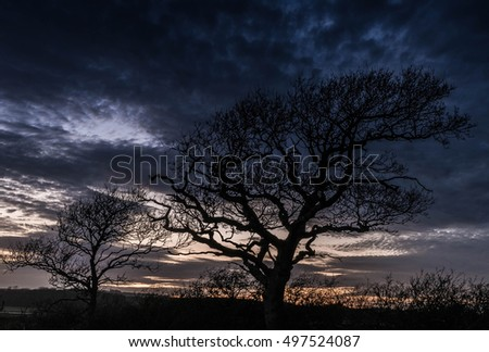 Oak Tree in silhouette at Sunset