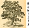 Oak tree -  old illustration by unknown artist from Botanika Szkolna na Klasy Nizsze, author Jozef Rostafinski, published by W.L. Anczyc, Krakow and Warsaw, 1911 - stock photo